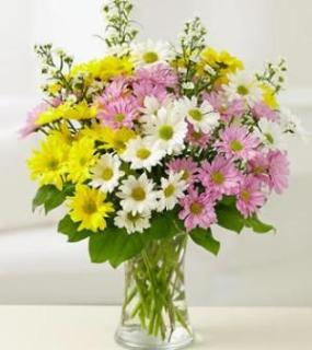 PRETTY DAISIES FOR MOM