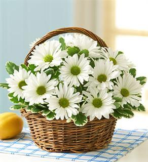 "A White Daisy Basket ""EVERYDAY LOW PRICE\"""