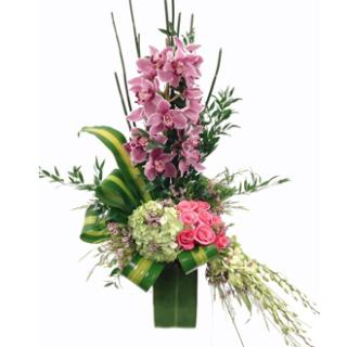 CYMBIDIUM ORCHIDS FOR THE LADY!