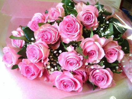 12 LIGHT PINK ROSES WRAPPED
