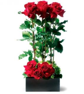 RED ROSES ON DISPLAY