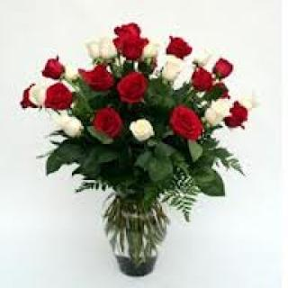 LOVES FIRST KISS 2 DOZEN RED & WHITE LONG STEM ROSES