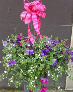"OUTDOOR HANGING MIXED FLOWER 10"" BASKET"