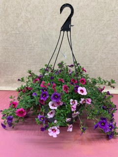 OUTDOOR PETUNIA HANGING BASKET