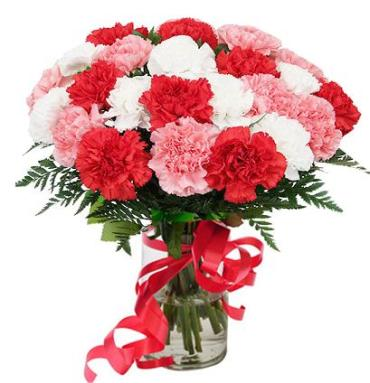 24 LOVELY CARNATIONS FOR YOU